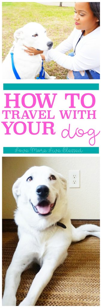 Traveling with your dog? Here are 5 tips to read before going on that road trip with your dog.