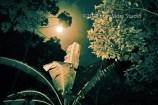 Moonlight over the banana tree