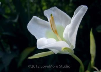 Fragrant wildflower