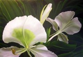 White Ginger Lily (2013) 70x100cm SOLD