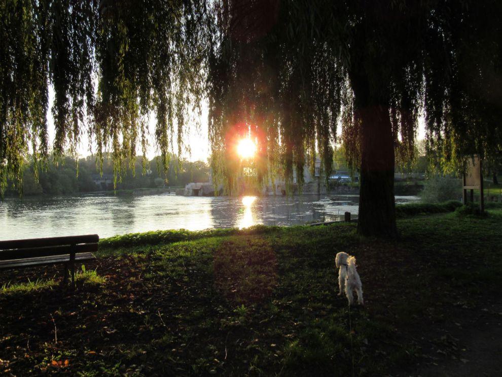 Poppy watching the sunrise