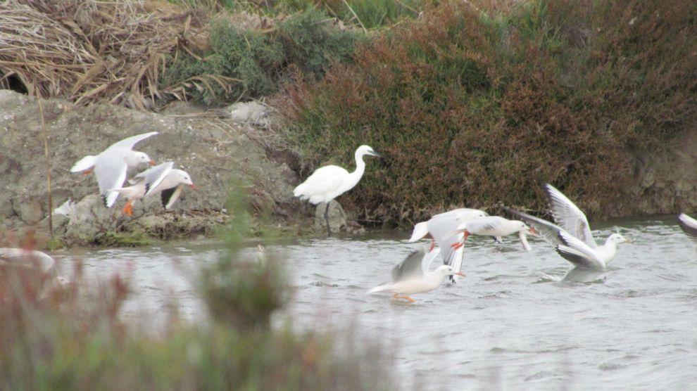 Birds in the water