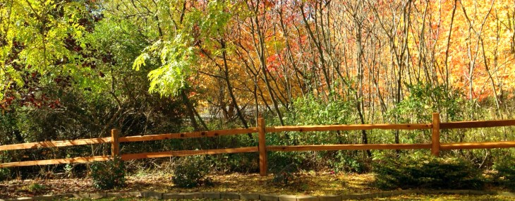 Fall Splendor – Canvasing the Neighborhood