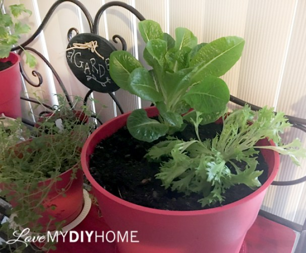 Celery on Your Windowsill {Love My DIY Home}