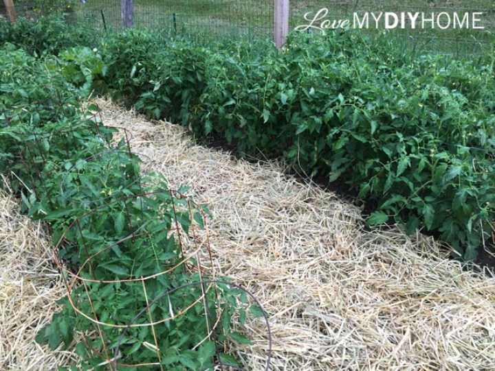 Using Straw for Mulch {Love My DIY Home}