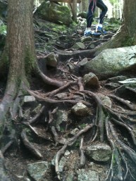 Roots on the way up.