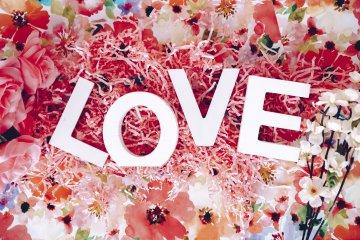 love lettres rose fleurs cerisiers