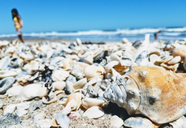 The MOST seashells I have EVER seen on 1 beach.