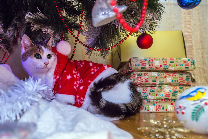 Как празднуют Рождество в Ирландии