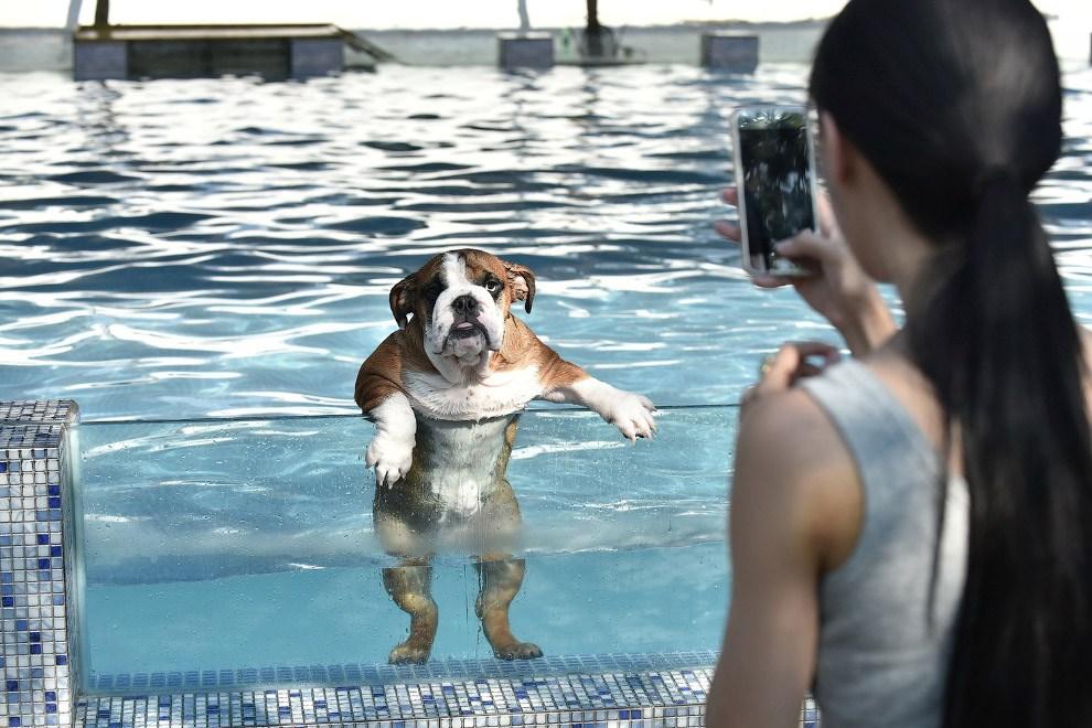 Собака в бассейне в провинции Сычуань, Китай