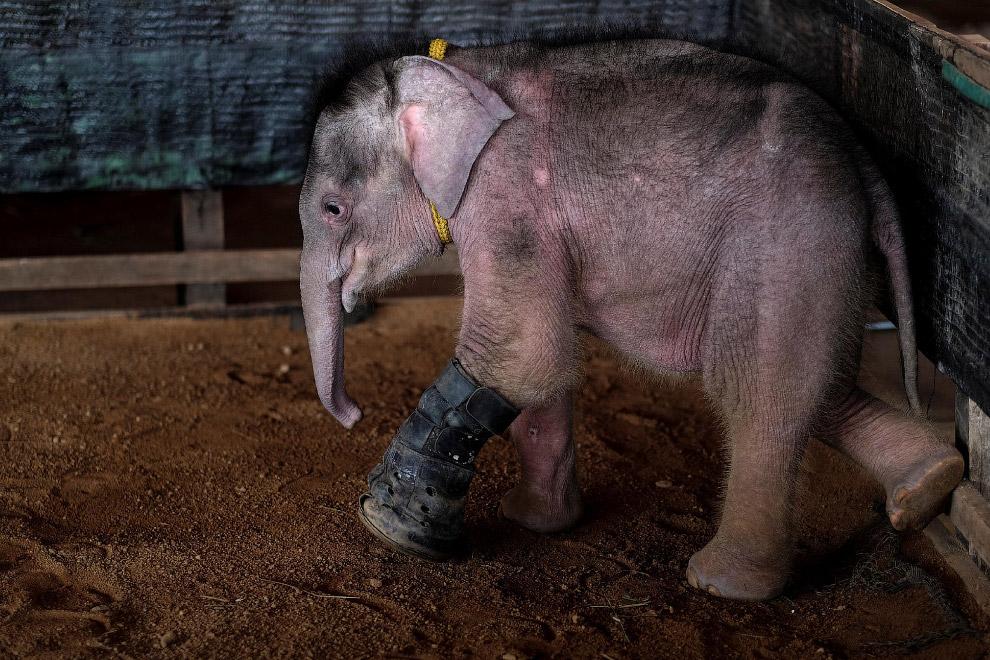 Как слона учат в воде заново ходить