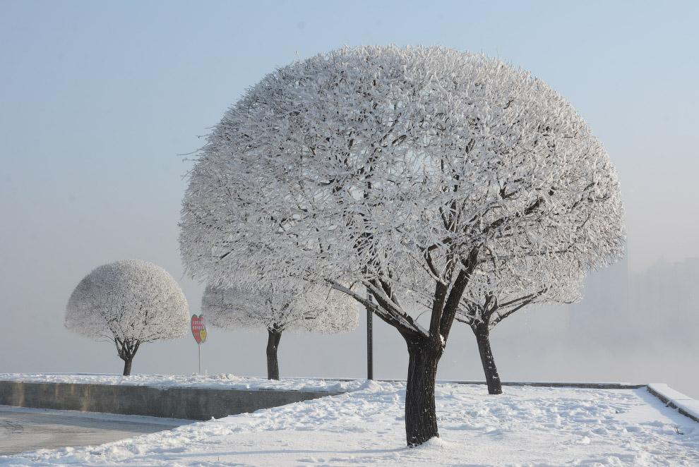 Деревья со снежными шапками в городе Цзилинь, Китай