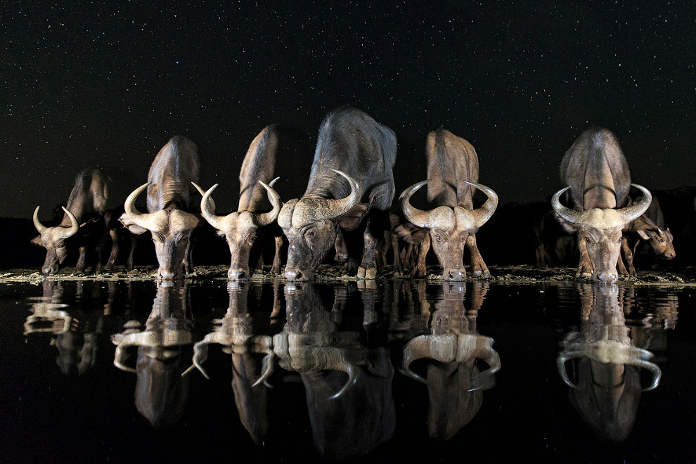 Швеция: водопой под звездами
