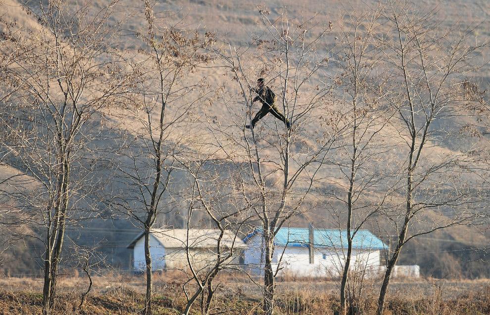 Северный корейский солдат лазит по деревьям  на границе с Китаем