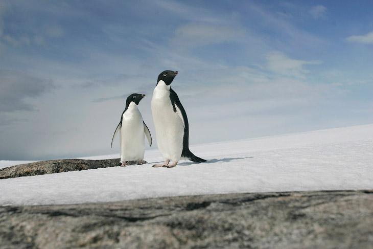 Всемирный день пингвинов 2017