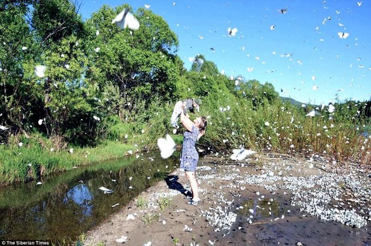 Эффект бабочки по-сибирски