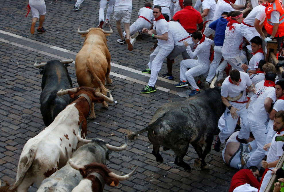 Бега быков в испанской Памплоне