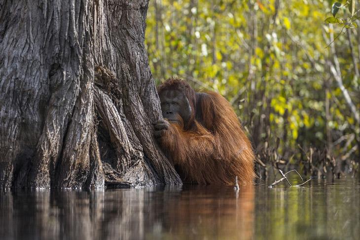 National Geographic: лучший природный фотограф 2017