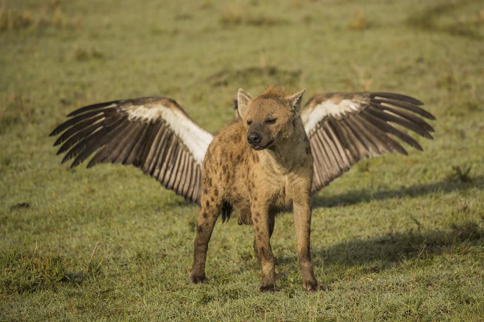 Крылатая гиена