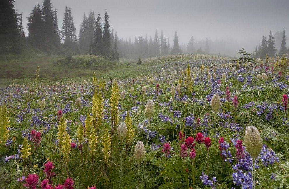 Национальный парк Маунт-Рейнир, Вашингтон, США