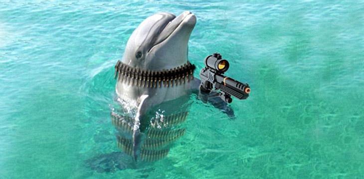 Боевые дельфины-разведчики