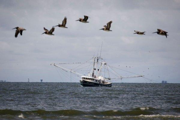 Виртуальное путешествие по США - «Штат пеликанов» | ТУРИЗМ ...