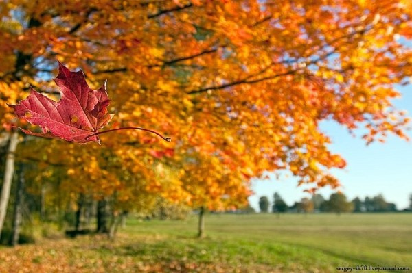 Листопад, листопад... Золотая осень уходит | ФОТО НОВОСТИ