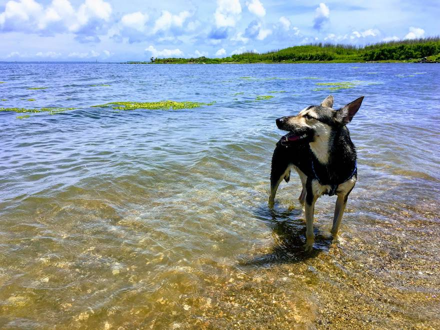 澎湖(ポンフー)の犬