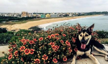 澎湖(ポンフー)で引き取った愛犬「たぷり」と台湾の保健所事情