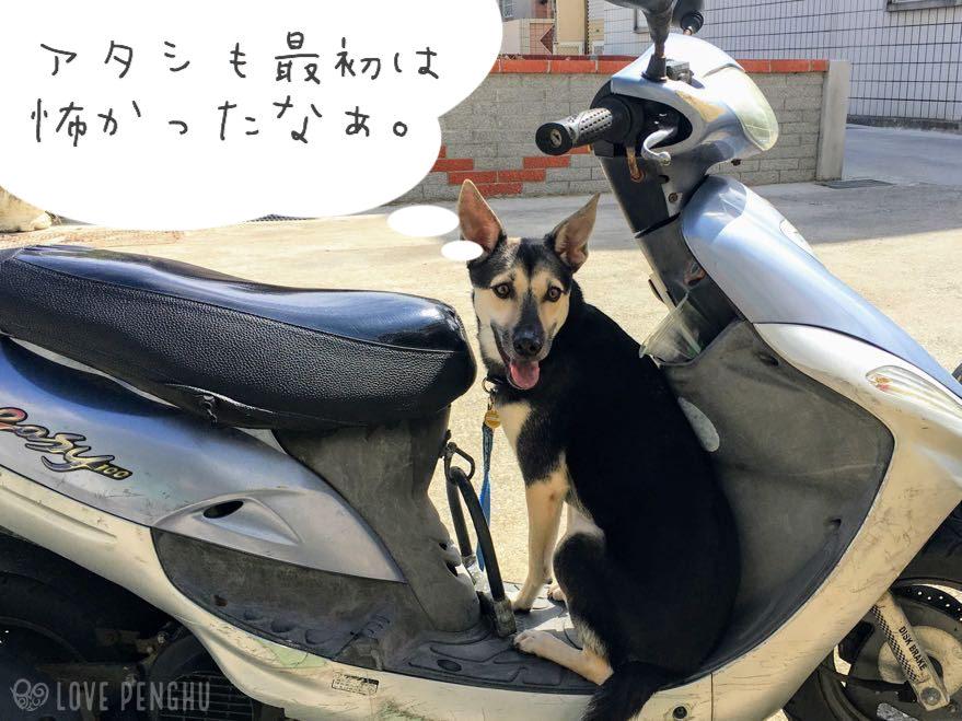 愛犬タプリも最初は怖くてスクーターにおとなしく乗ることができなかったが、今はどこに行くときも自分からスクーターに乗るようになった。