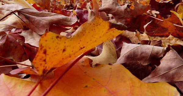 Simple soil building for free: Autumn leaves make the best soil