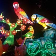 Magical Lantern birds