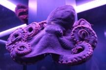 Sea Creatures octopus