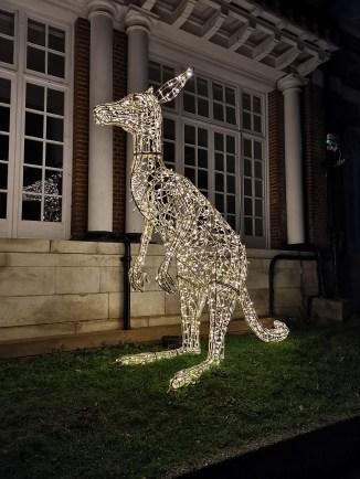 ZSL London Zoo kangeroo