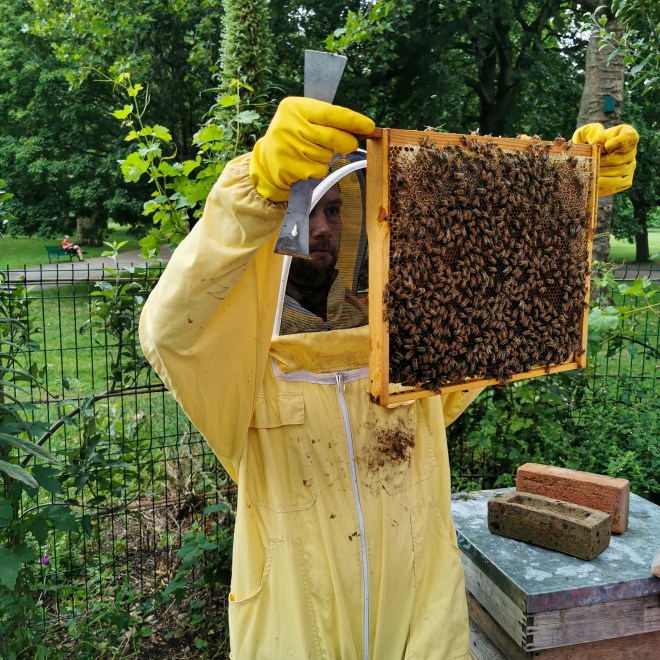 Hiver Honey bees experience