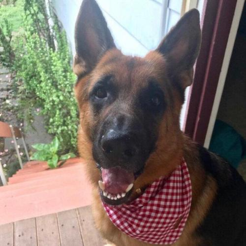 Red Gingham Bandana photo review
