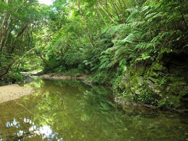 沖縄の清流・源河川