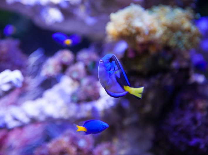 水族館 ドリー