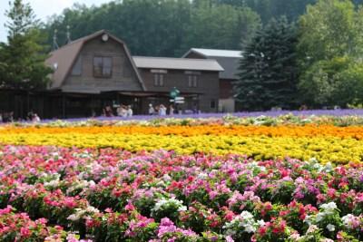 富良野の綺麗な花畑