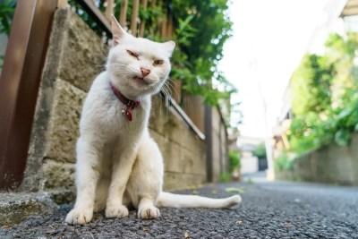 反社会的なイメージ:猫