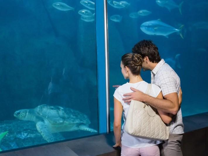 初デート 水族館