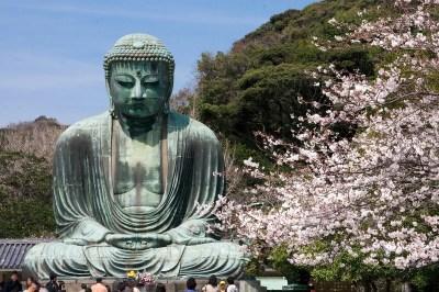 鎌倉大仏と桜