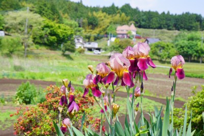 田園風景 綺麗な花々