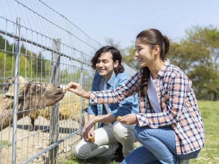 動物園デート ヤギに餌をあげるカップル