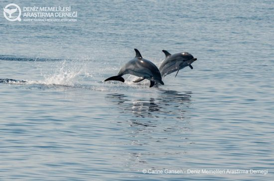 marine mammals research association expedition