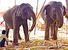 Hurry to help rescue Suzy and the other elephants..