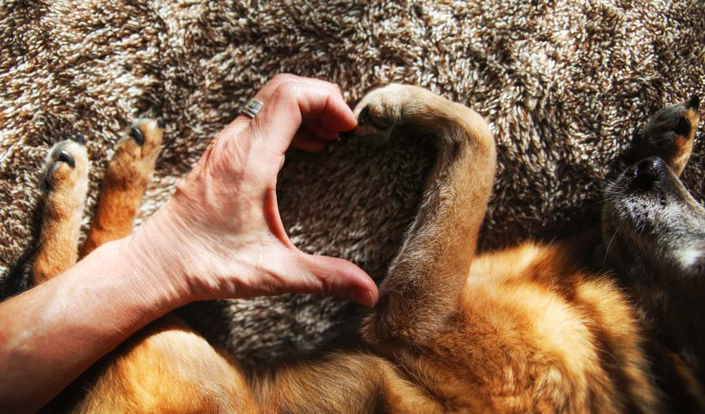 Are Dogs Replacing A Mother's Love?
