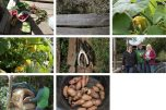 Common Cause, Lewes Organic Allotment Project