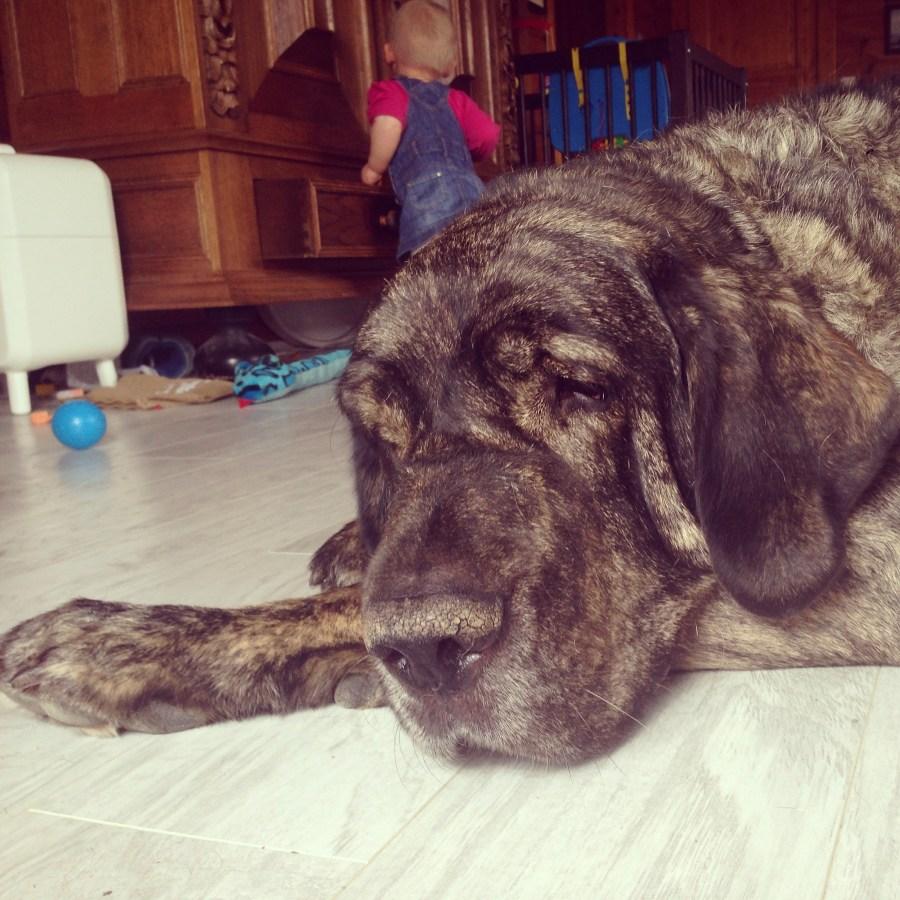 Woensdag is onze hond ziek. Steeds ging Mello maar naar buiten (toen was het weer koud) en dan was mijn hele lijf koud en had een gloeiend voorhoofd. Zo sneu! Hij zocht vooral onze geborgenheid en knuffels, dus dat was schattig