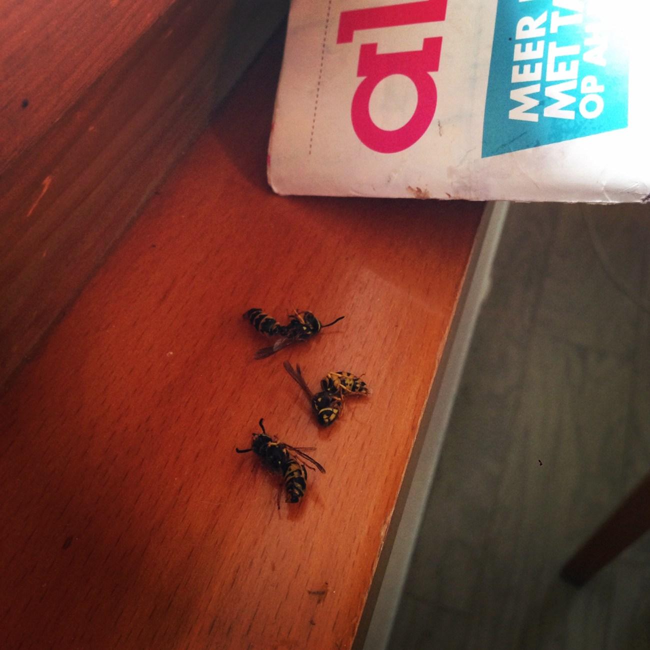 Ook maak ik heel veel wespen dood. Jakkes!